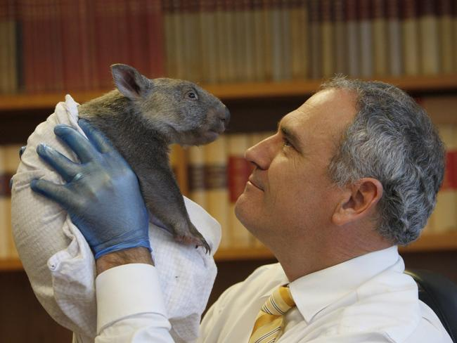 Henry with an orphaned Hairy-nosed wombat of which he is a passionate protector.