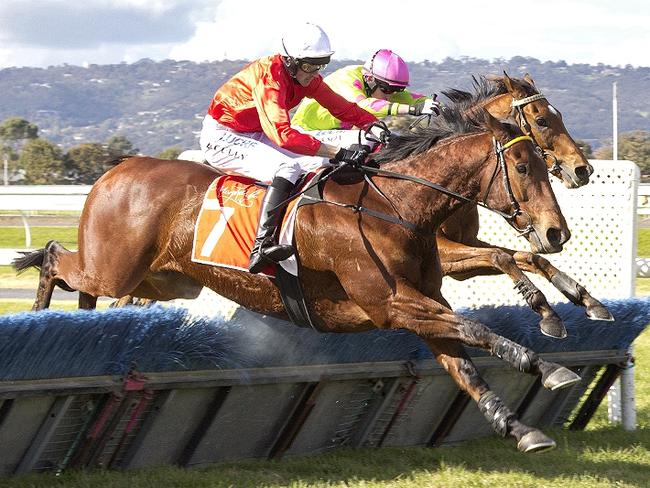 Cougar Express (inside) and Sir Lopez go over the final fence at Morphettville. Picture: Atkins Photography