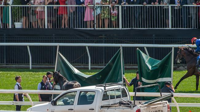 What they don't want to see. A horse euthanised behind screens in front of the Flemington crowd. Picture: Jason Edwards