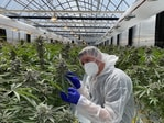 The Australian Natural Therapeutics Group has struck a $92m deal to ship medicinal cannabis to the EU. Picture: Supplied