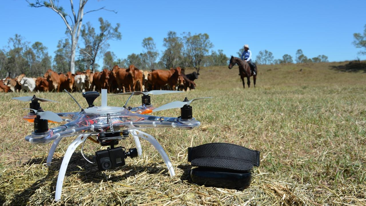 Drones are being used by farmers to help muster cattle in Queensland.