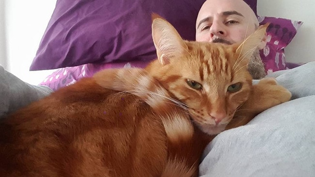 Joel Rogers was saved by his cats, Thor (pictured) and Loki.