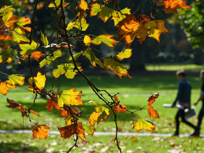 The autumn chill has brought blistering winds, with leaves falling in the Fitzroy Gardens in Melbourne this week. Picture: Penny Stephens/AAP