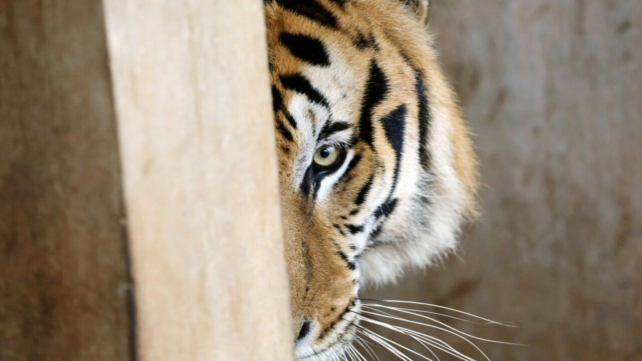 86 tigers from Thai tourist attraction die