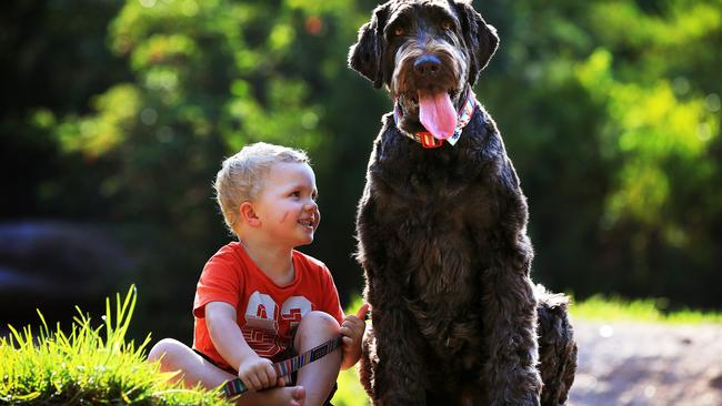 Patrick, 3, with O'Malley, a labradoodle. Picture: Toby Zerna