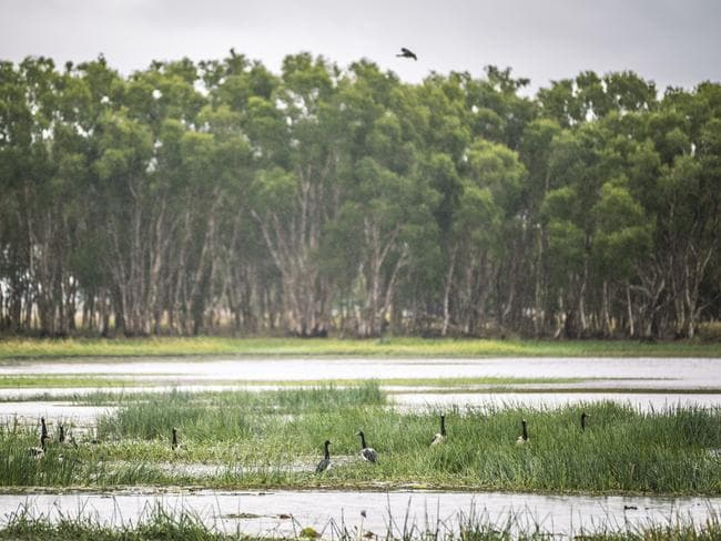 Weeding and feral pig control is making a difference at Bulgaroo wetland at Mungalla Station. Picture: Annette Ruzicka/Greening Australia.