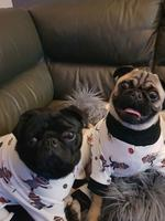 Onslow and lil spud in their new jammies eagerly awaiting their first trip to a drive-in movie. Picture: Belinda