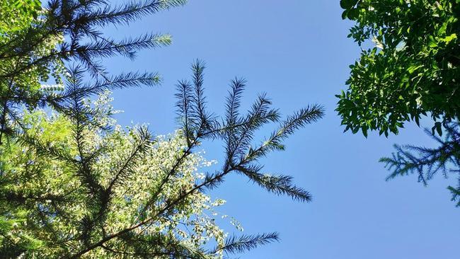 Jan's most recent post showed a blue, sunny sky. Picture: Facebook/Jan Zon van Dorsten