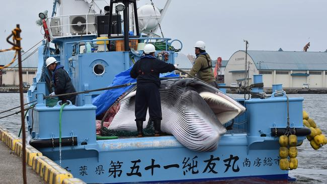 Japan whaling: Shocking photos show first kills in renewed whale hunt