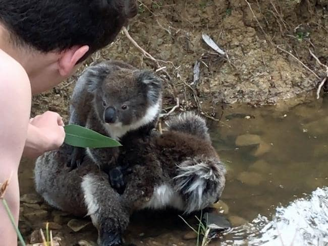 The mother and joey were hanging by the creek when Meagan and her son found them. Picture: Meagan Pfitzner / Caters News P