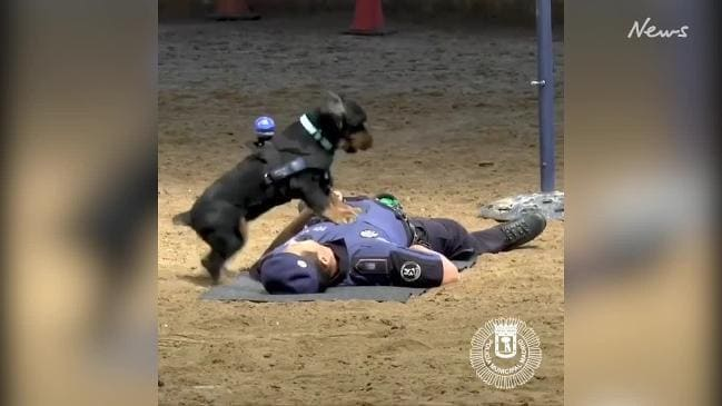 Spanish police have trained their dogs to perform CPR