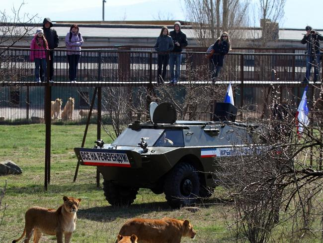 "Show of force ... Visitors look at lions and zoo staff riding in an armoured vehicle with Russian flags and a sticker reading ""All to the referendum!"" at the Lion's park outside Simferopol. Picture: YURI LASHOV"