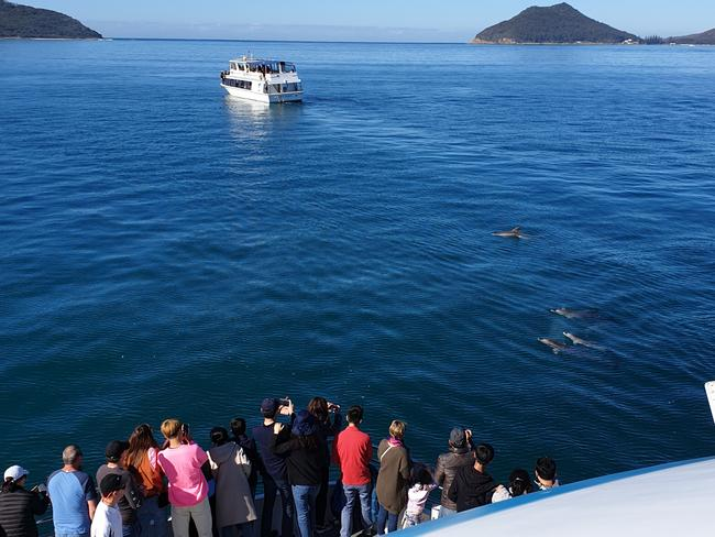 A pod of dolphins greets cruisers aboard the Moonshadow vessel in Nelson Bay.