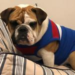 "Roxie is named after the female mascot at the Western Bulldogs. The 15-month-old would like to be a real mascot for the Western Bulldogs ""when she grows up!"" Picture: Julie Edwards, Ascot Vale"