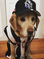 Daisy was named after Dale 'Daisy' Thomas - before he defected to Carlton! The six-year-old labrador cross always watches the Pies games and even tolerates her owner yelling at the TV. Picture: Jodi Gubana, Pascoe Vale South