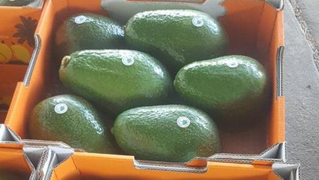 Massive 1 8kg 'Avozillas' have just hit stores | Star 104 5