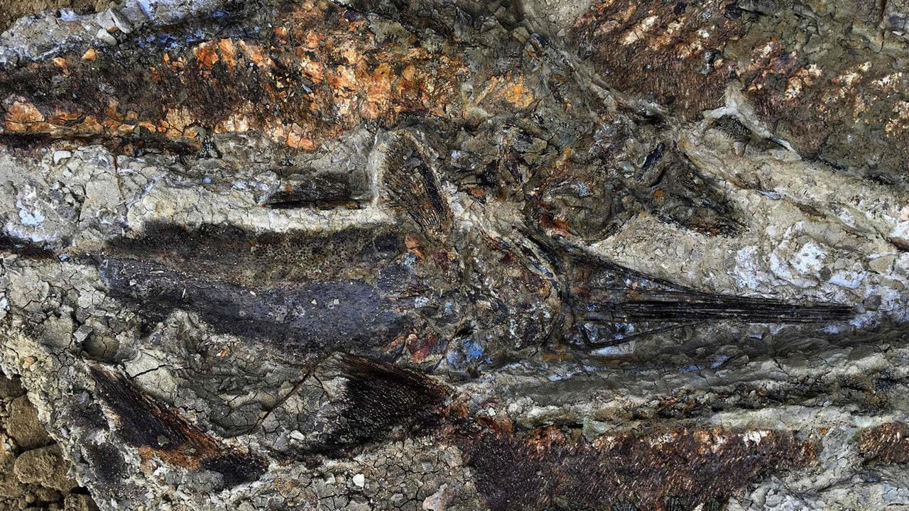 A tangled mass of fish fossils uncovered in North Dakota, US. The site appears to date to the day 66 million years ago when a meteor hit Earth, killing nearly all life on the planet. Picture: AFP
