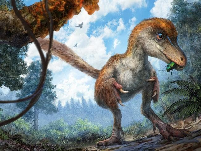 The dinosaur is a small-sized relative of the T-Rex. Picture: Chung-tat Cheung