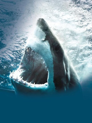 I can't see anyone doing a Yelp review of the great white shark cafe anytime soon. Picture: Getty Images