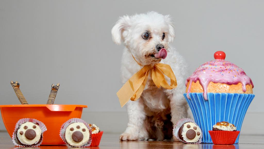 Cupcake Day for the RSPCA will raise much needed money for