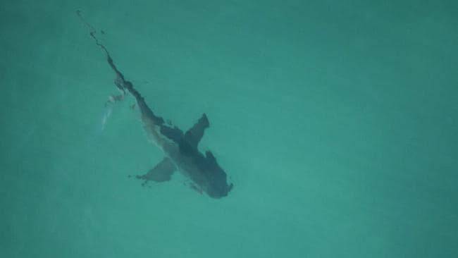 It's suspected Paige was attacked by a Bull Shark. Picture: Supplied
