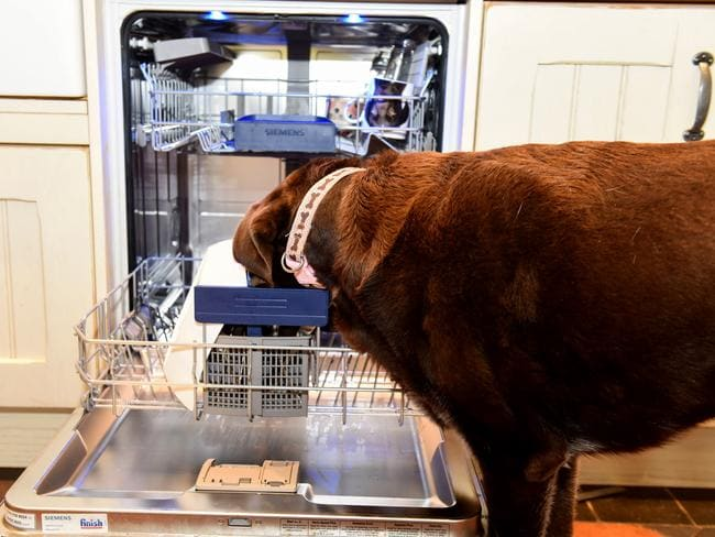 'Anything in here?' Picture: Caters News