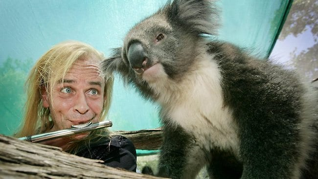 Greg Ham from the band 'Men at Work' is playing at a concert on Australia Day at the Melbourne Zoo and was getting in some last minute rehearsal with Lilly the the 3-year-old koala.