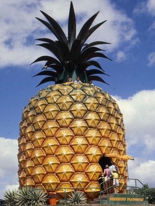 Image Result For Big Pineapple Festival