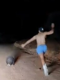 He continues to pelt the animal with rocks until he finally smashes one on its head and it falls over. Picture: Wombat Awareness Organisation