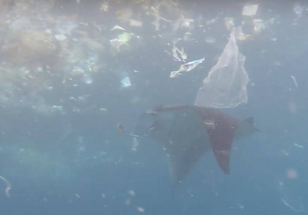 Manta Ray Swims Through Trash in Search of Food