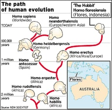 Evolutionary tree from the University of Georgia. Picture: supplied
