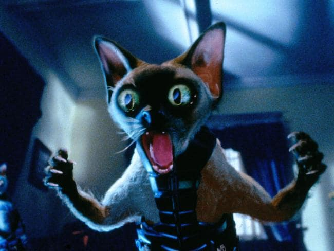 Time to wake up! Some 24 per cent of NSW cat owners say their feline overlords don't respect their sleep ... Picture from the movie Cats & Dogs