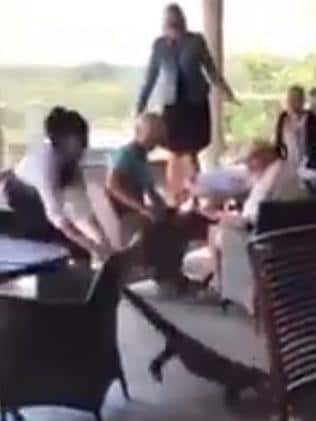 Waitress drags goanna out of Mimosa Wines and Drystone Restaurant