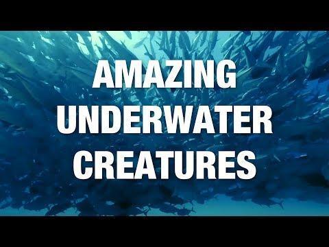 The best underwater photography: Amazing sea creatures