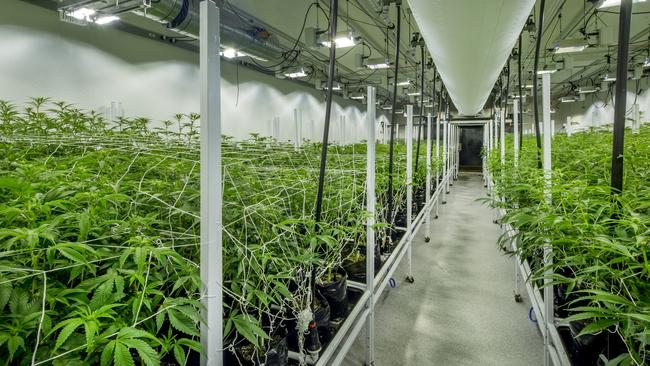 Since marijuana was legalised in some states of America, a huge industry has sprung up. It's supposed to be a $50 million market by 2026.
