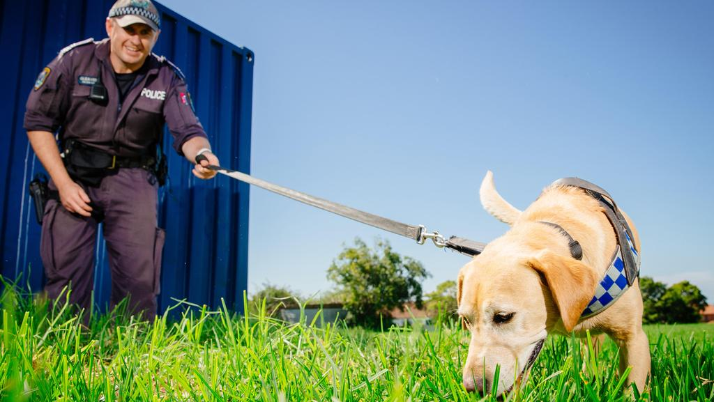 Drug Dogs To Search For Drugs Hidden At Music Festival