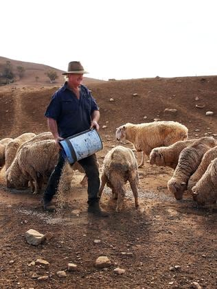 Les Jones feeds the remaining sheep on his property near Gunnedah. Picture: Sam Ruttyn
