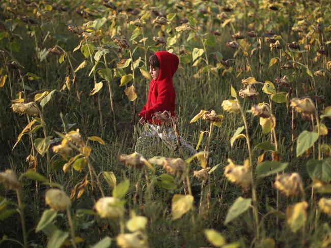 A young Syrian boy plays in a field in Roszke as he waits with his family to cross into Austria. Picture: Christopher Furlong/Getty Images.
