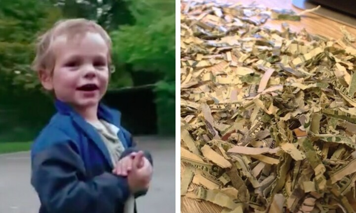 Two-year-old boy shreds $1400 his parents had saved to pay off their debt