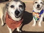 Mylo and Sophie look like an old retired couple on a holiday. Picture: Lauren Pearce