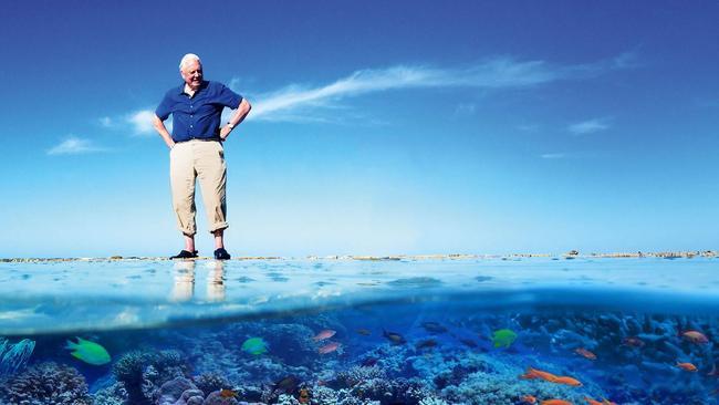 David Attenborough sur la grande barrière de corail.