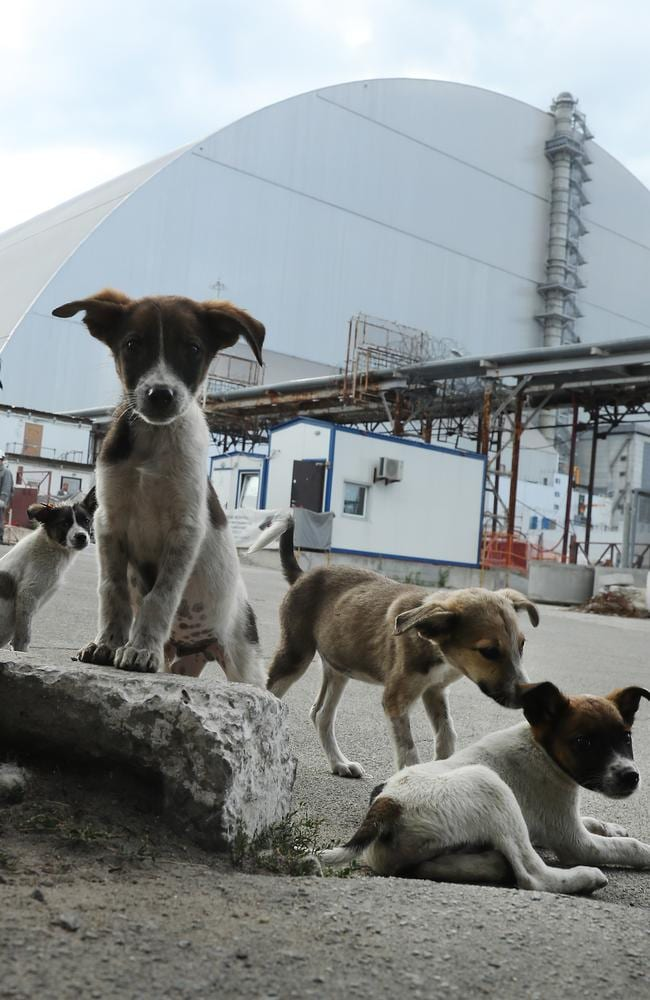 "Stray dogs loiter inside the high-security ""local zone"" outside the new, giant enclosure that covers devastated reactor number four. Picture: Getty Images"