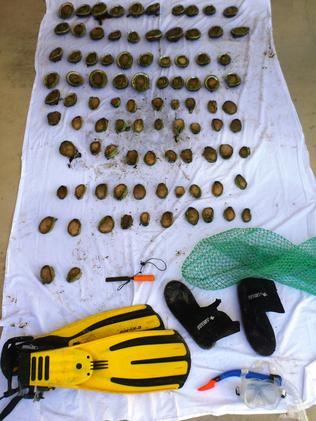 The haul of abalone seized near Hardwicke Bay. The legal personal limit is five. Picture: SA Police