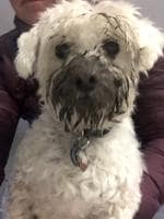 """What? It's a mud mask"" Picture: Maxine Lee"