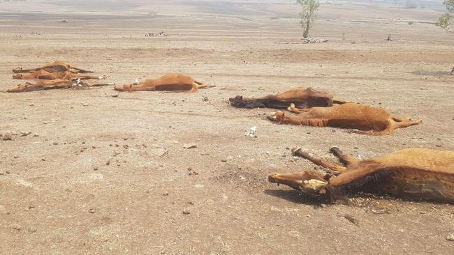 Dozens of dead horses were found. Picture: Animal Liberation Queensland