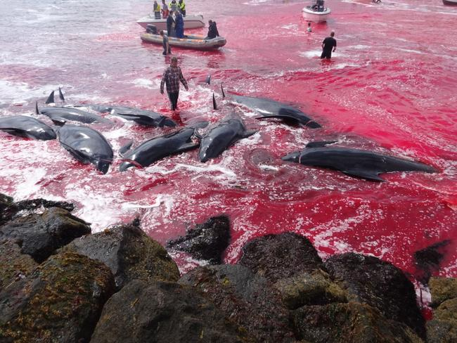 The ocean runs with blood after the killings. Picture: Alastair Ward/Triangle News