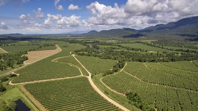 Aerial view of banana plantation in Tully. Photo supplied.