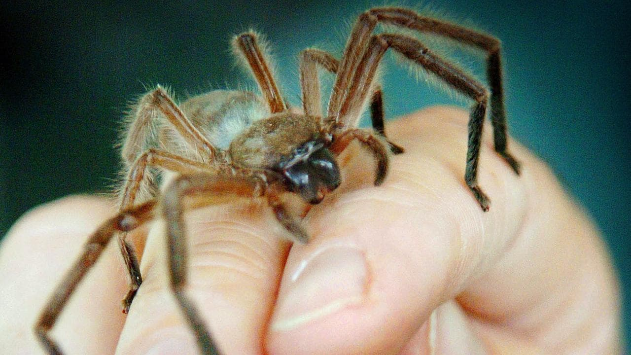 Seeing actual spiders and ants in a film wasn't as successful as seeing the superhero versions. Picture: Sara Nixon