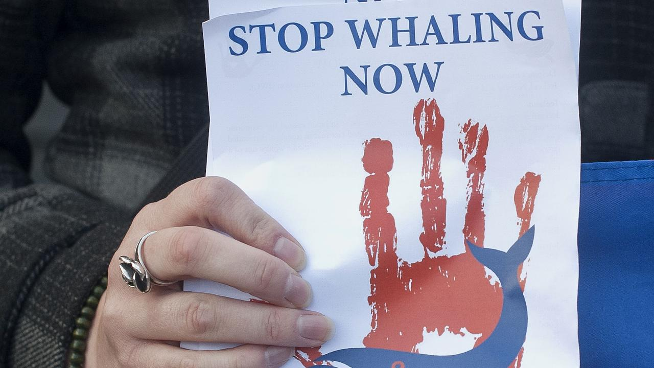 An anti-whaling protester holds up a leaflet outside the Norwegian embassy in London in 2015. Picture: AFP
