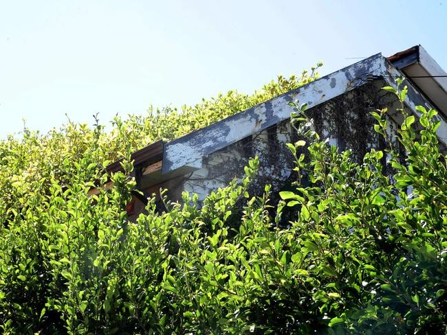 The Bobolas hoarder house is dilapidated and has vegetation growing on the roof. Picture: John Appleyard